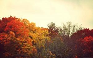 herfst type