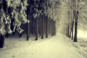 winter type